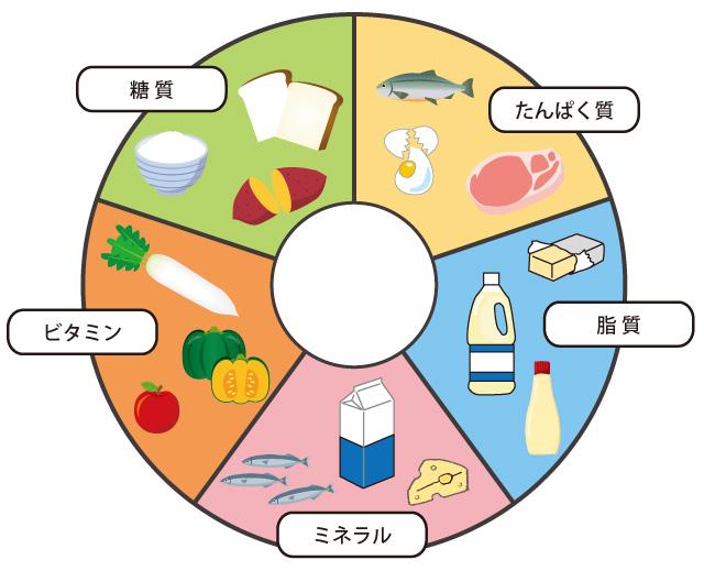 栄養素 働き 五大 五大栄養素とその働き・役割